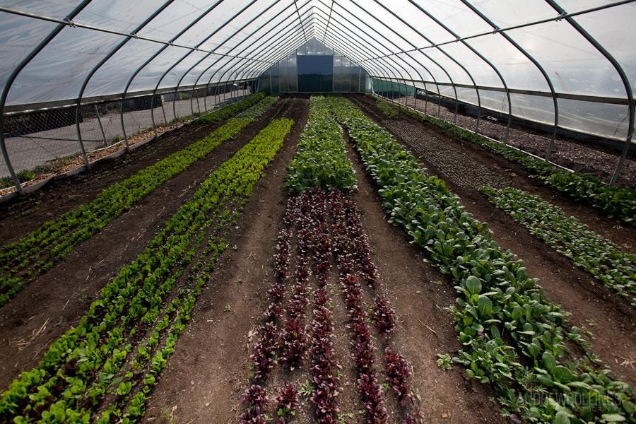 Growing Home Wood Street Farm